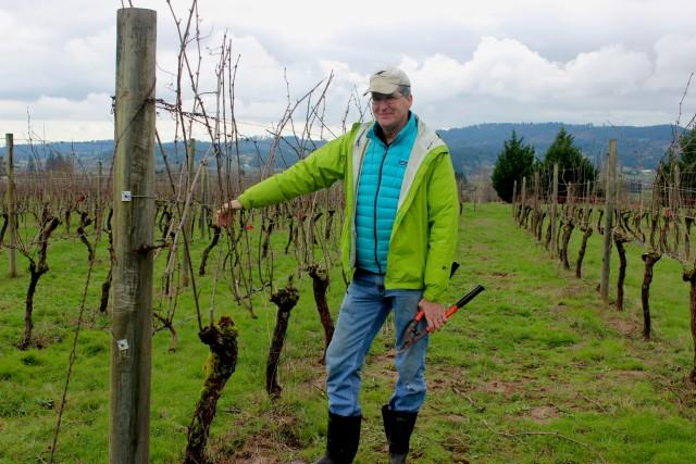 David Robinson learning to prune vines near Newberg, Oregon